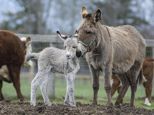 Jenny shows off her newborn foal. Photos: Nora Lewis