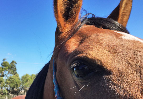 A study suggests multi-drug resistance is emerging in NZ horses
