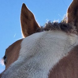 Global horse movements a risk for glanders spread, review suggests