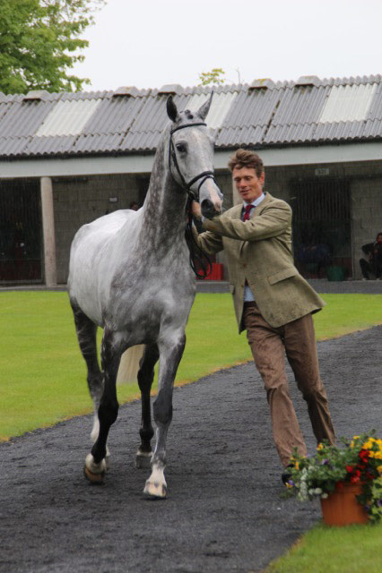 Lots of the horses didn't like the ground jury's big umbrella, including this one of William Fox-Pitt's.