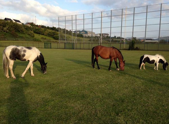 horses-northern-ireland-sports-pitches