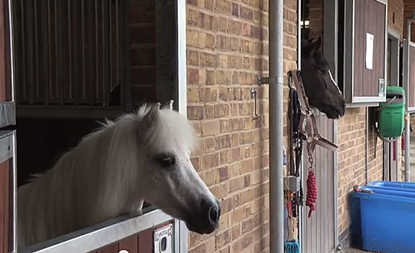 Pedro has a new outlook on life, thanks to a new stable door. Photo: Ebony Riding Club