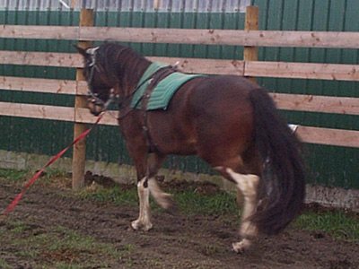 side-reins400