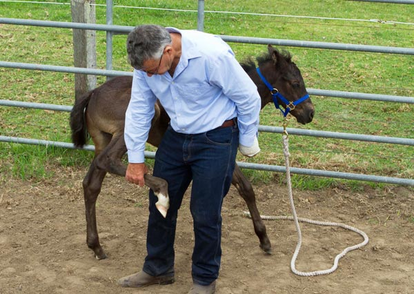 """It's always fun and very rewarding to teach a foal to be confident and relaxed with humans,"" writes Neil Davies."