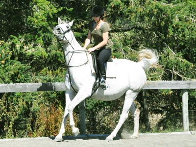 rein-bridle-canter400