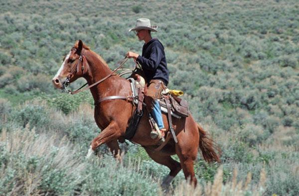 trail-trek-western