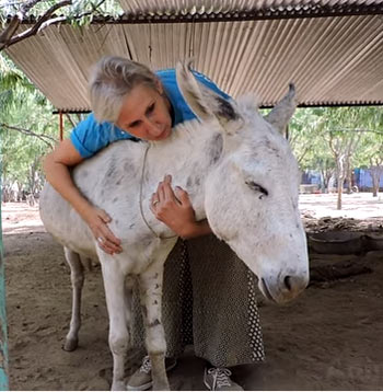 Lance has now found sanctuary for life with Animal Aid Unlimited. Photo: Animal Aid Unlimited, India/YouTube
