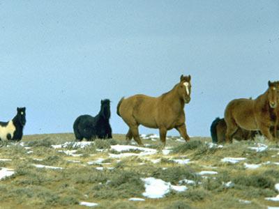 wild-horses-400