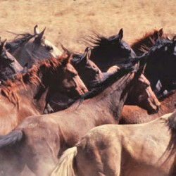Lawmakers told of BLM's challenges in managing wild horse numbers