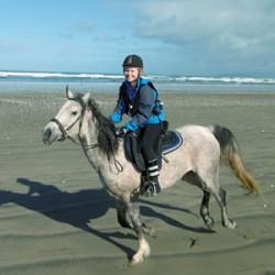 Evidence of temporary cardiac fatigue found in endurance horses