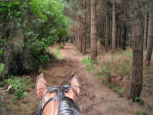 ears-endurance-trail