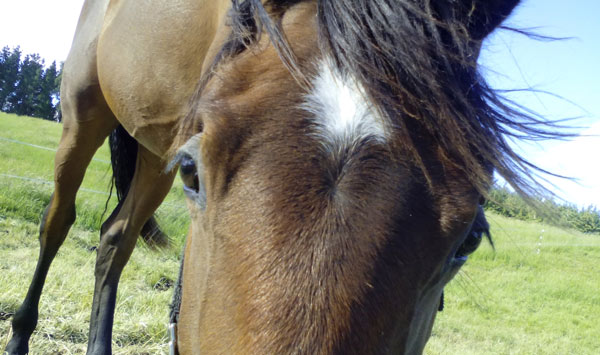 Bug behind farmer's flesh-eating infection was probably caught from his horses