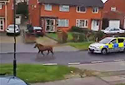 pony-on-loose