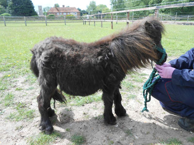 The ponies were said to be housed in unsatisfactory conditions.