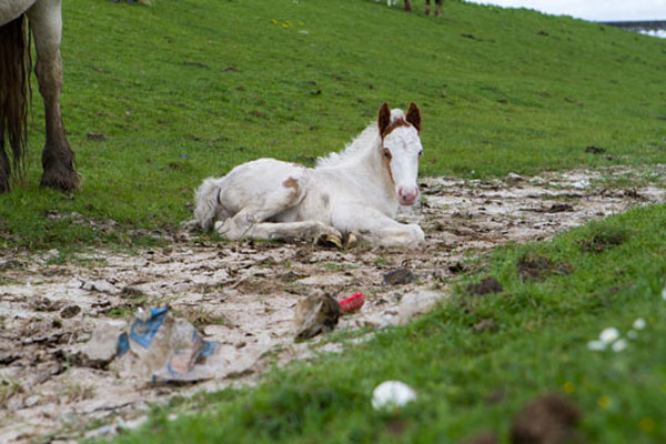 The future is uncertain for many foals born in the UK. Photo: World Horse Welfare