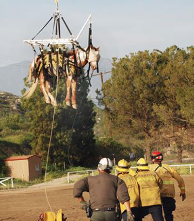 The horse is delivered safely to the landing zone. Photo: Mike Meadows/LA County Fire Dept/Facebook