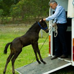 Easy does it: Teaching your horse to load on a trailer