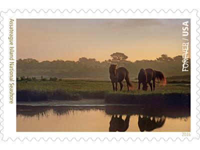 stamp-assateague-featured