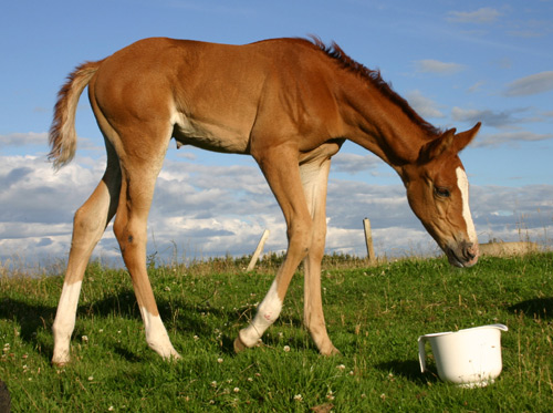 foal-razz-stock
