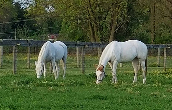 "Lily, left, and Anita are both making great strides in their recovery. Photo: Omega Horse Rescue and Rehabilitation Center ""Kelly Smith""/Facebook"