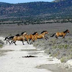 Cost-effective and humane ways exist to manage wild horses, says advocate