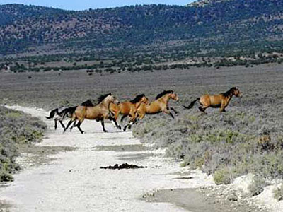 The great division in the debate over America's wild horses - Horsetalk.co.nz