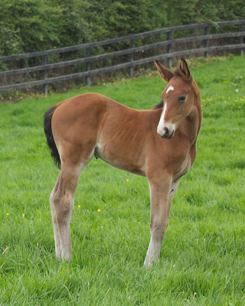 Global Views Horse: Colt Foal Tops Sport Horse Sale At £30,000
