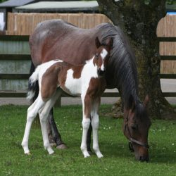 Mare's death-defying return to health rewarded with filly foal