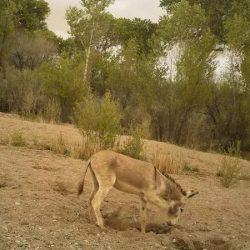 The secret lives of well-digging burros