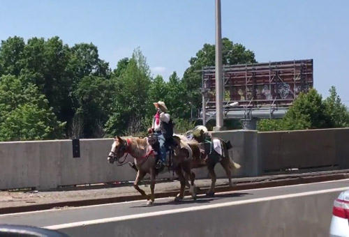 A screen grab from @calvs88.'s Twitter video of the two horses and a rider on the Outerbridge Crossing .