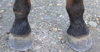 barefoot-hoof-800-445