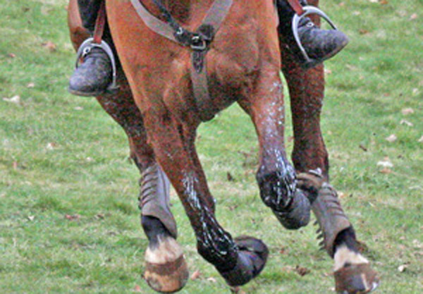 eventing-gallop-stock-al-crook-600x417