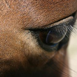 Six horses test positive for equine infectious anemia in Kansas