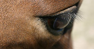 Web portal to help researchers explore the genetic make-up of horses