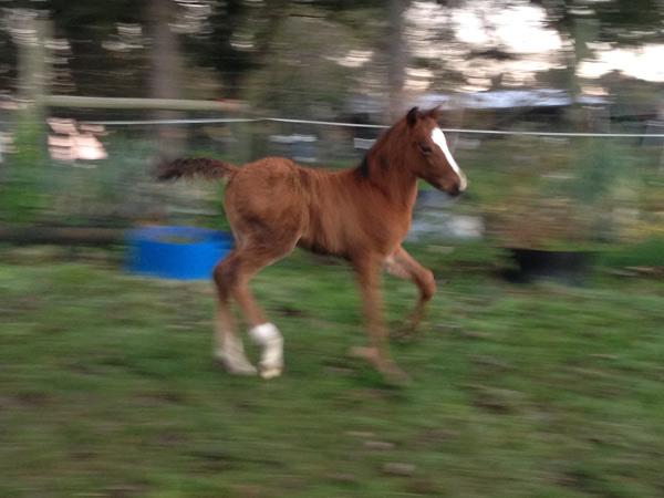 foal-stock_0781