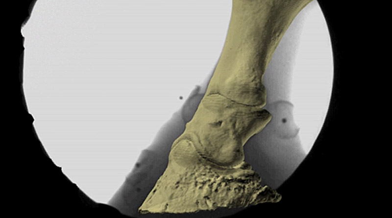 foot-imaging-800x445