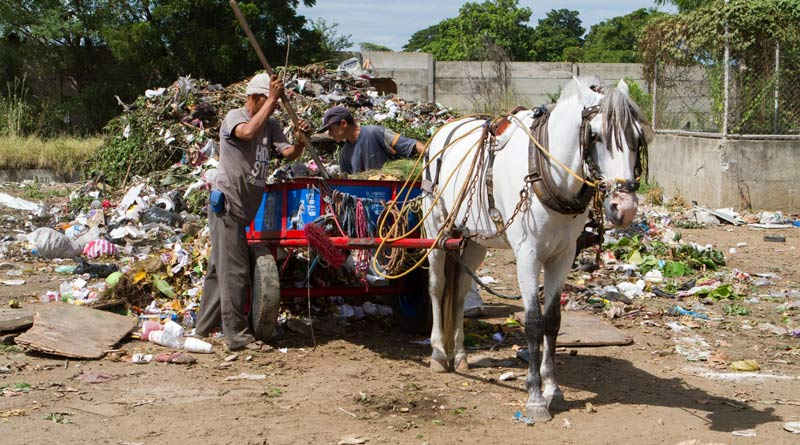 A horse working on a rubbish dump in Nicaragua.
