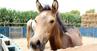 Rare calcium-related disease suspected in death of rescue filly in Spain