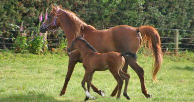 Selenium soil deficiency in parts of the Netherlands can endanger newborn foals – study