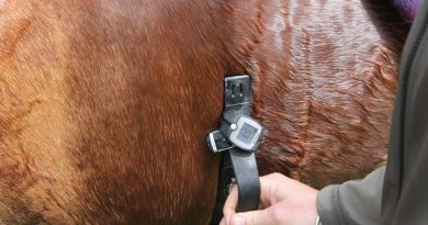 Training smarter: How to use heart-rate monitors with horses