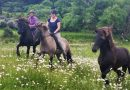 Survival of the fittest: The extraordinary Icelandic horse