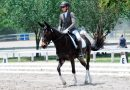 Winning dressage mule Slate a champion for working equines