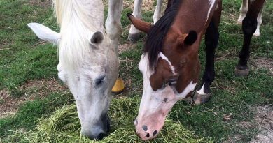 Solo and his best pal Luna at Mitchell Farm.