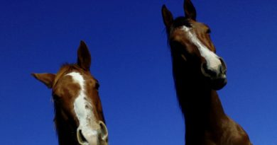Scientists honored with equine research Hall of Fame induction