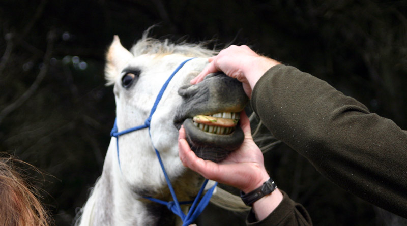 Are NSAIDs the best pain relief for horses?