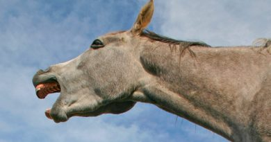 Behind every good horse joke is quantum theory, research suggests