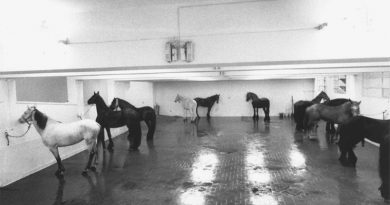 But is it art: How 12 horses ignited the Arte Povera movement