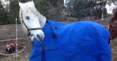 Horses communicated blanketing choices in Norwegian study