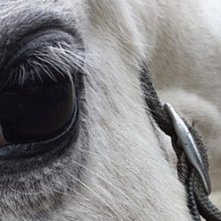 Stem cells show promise in helping to heal eye injuries in horses