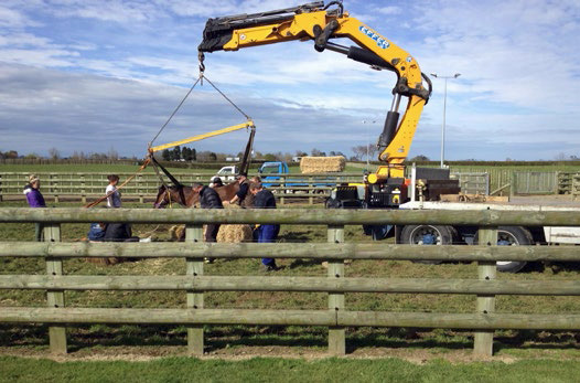 A local contractor brought a Hiab Loader to get Flying Monty on her feet after she could not stand after foaling.